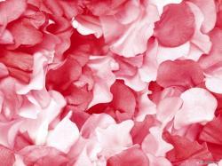 Free Flower wallpaper - Petal wallpaper - 1600x1200 wallpaper - Index 20.