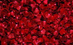 Flowers flower petals wallpaper background