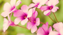 Spring Flower Pictures