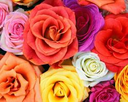 Luxury Flower Delivery London, Best Florist London   The Flower Stand Chelsea