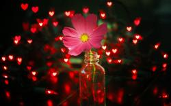 Flower Pink Jar Lights Red Hearts
