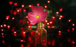 Flower Pink Jar Lights Red Hearts