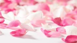 DOWNLOAD WALLPAPER Pink Flower Petals - FULL SIZE ...