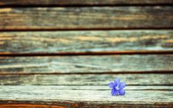 Flower Purple Wood