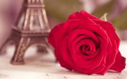 Flower Red Rose Eiffel Tower Photo