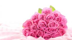 Pink Rose Flower Images 16 HD Wallpapers