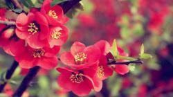 Share flower wallpaper Wallpaper gallery to the Pinterest, Facebook, Twitter, Reddit and more social platforms. You can find more drawings, paintings, ...