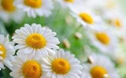 Awesome Flower Wallpaper