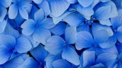 Flower Wallpaper 137 Background Cool