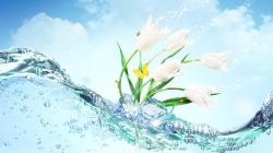 Flower Wallpaper Desktop 1221