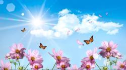 Flower Wallpaper Widescreen