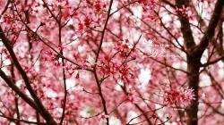 Breathtaking Flower Wallpaper Tumblr 1366x768px
