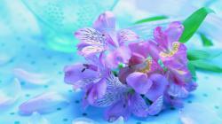 freesia-flower-wallpaper-1920x1080-1076 (Flower Wallpapers in 1920×1080