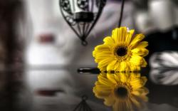 Flower Yellow Reflection