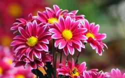 Beautiful flower 02 Beautiful flower 03 Beautiful flower 04 ...
