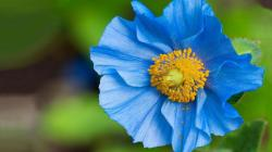 Close up Flower Wallpaper Flowers Blue Close up