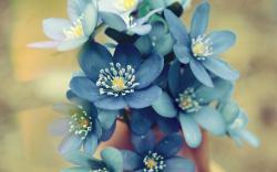 Flowers Blue Petals