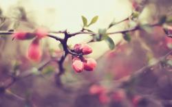 Branch Pink Flowers Blur Macro Photo HD Wallpaper