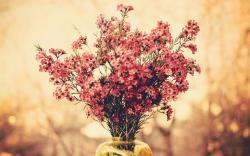 Flowers Bouquet Macro