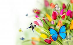 Butterflies and Flowers Pictures Wallpapers