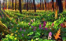 forest of flowers - Google Search | Aisling Territory: northwest | Pinterest