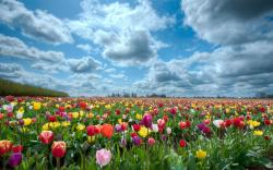 Nature Flowers Field Wallpapers Ilikewalls