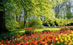 Nature trees flowers garden tulips wallpaper HQ WALLPAPER - (#15997)