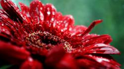 Nature Flowers Plants Macro Wallpaper