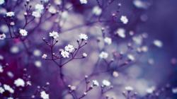 Flowers, buds, twigs, close-up, purple, white, blur