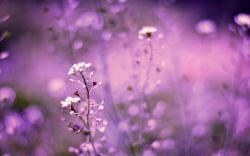 Flowers Purple Field Bokeh
