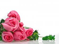 Flowers Images Roses For Desktop 5 HD Wallpapers