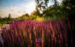 Flowers Summer Sun Nature