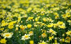 ... Yellow Flowers Wallpaper ...