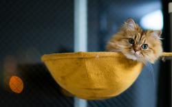 Fluffy cat chilling