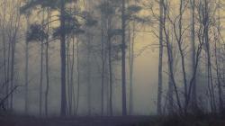 Forest Fog Free Wallpaper Desktop 6408 High Resolution