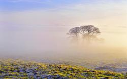 Morning fog scenery