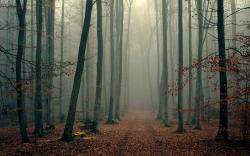 fogy forrest hd wallpapers cool desktop background images download free wallpapers