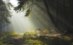 HD Wallpaper   Background ID:51504. 1920x1200 Earth Fog