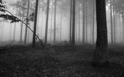 fog hd wallpapers beautiful desktop background images free download