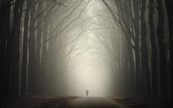 Foggy road in autumn wallpaper