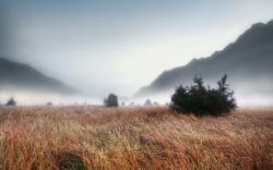 Foggy Grass Landscape