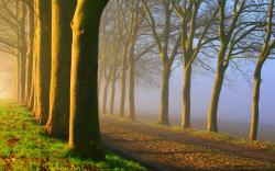 Foggy road sunrise Wallpapers Pictures Photos Images. «