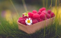 Food Raspberries Berry Daisy Flower Grass Nature