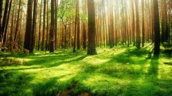 Forest Background 42 HD Images Wallpapers