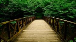 Forest Bridge Background 15032