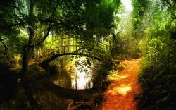 original wallpaper download: Bridge over Forest River - 1920x1200