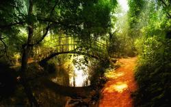 original wallpaper download: Bridge over Forest River - 1920x1200