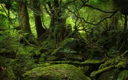 Download Green Moss Forest Wallpaper : Widescreen : 1152 x 720 | 1280 x 800 ...
