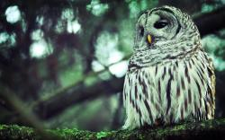 Forest Nature Branch Owl Bird Awesome Photo