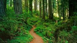 nature beautiful forest path background picture